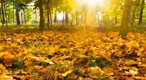 autumn-694